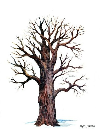Изучаем деревья