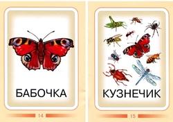 Насекомые. Дидактические карточки. бабочка