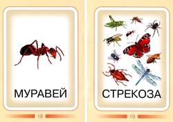Насекомые. Дидактические карточки. муравей