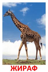 Дидактические карточки для детей. Животные, насекомы, птицы. Скачать бесплатно. жираф